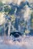 Orrhane i buldreposisjon (Foto: Rine G. Carlsen)