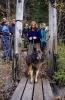 Willy (hunden, altså…) var fryktelig tøff i trynet, helt til han kom ca 2 meter