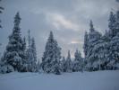 Fantastisk vinterstemning med snødekte trær og varierende lys (Foto: Marianne)