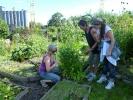Det luktes og smakes på salater og urter i parsellen til Karin. Mange friske og