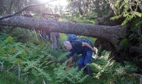 Ordentleg gammalskog, med rotvelt og frodig bregnevegetasjon. Ragnhild viser veg