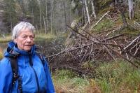 Fraflyttet: Turleder Ragnhild viser oss en gammel beverhytte i tjernet Sølvdobla
