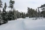 Nykjørte spor og nysnø på trærne. Marka på sitt beste. (Foto: Nina Didriksen.)