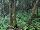 Skog! (Foto: Grete Amundsen)