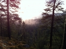 Trolsk i tåka. Utsikt fra en navnløs topp i Østmarka. (Foto: Nina Didriksen)