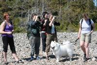 Ivrig speiding på rullesteinstranda. Sissel, Rine, Jorun, Susanne og Berit tar e